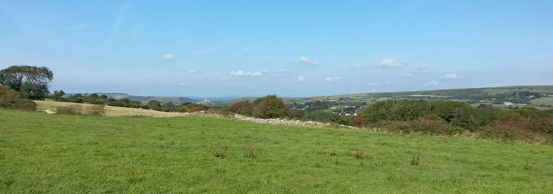Dog friendly campsite with fabulous walks in the Dorset countryside